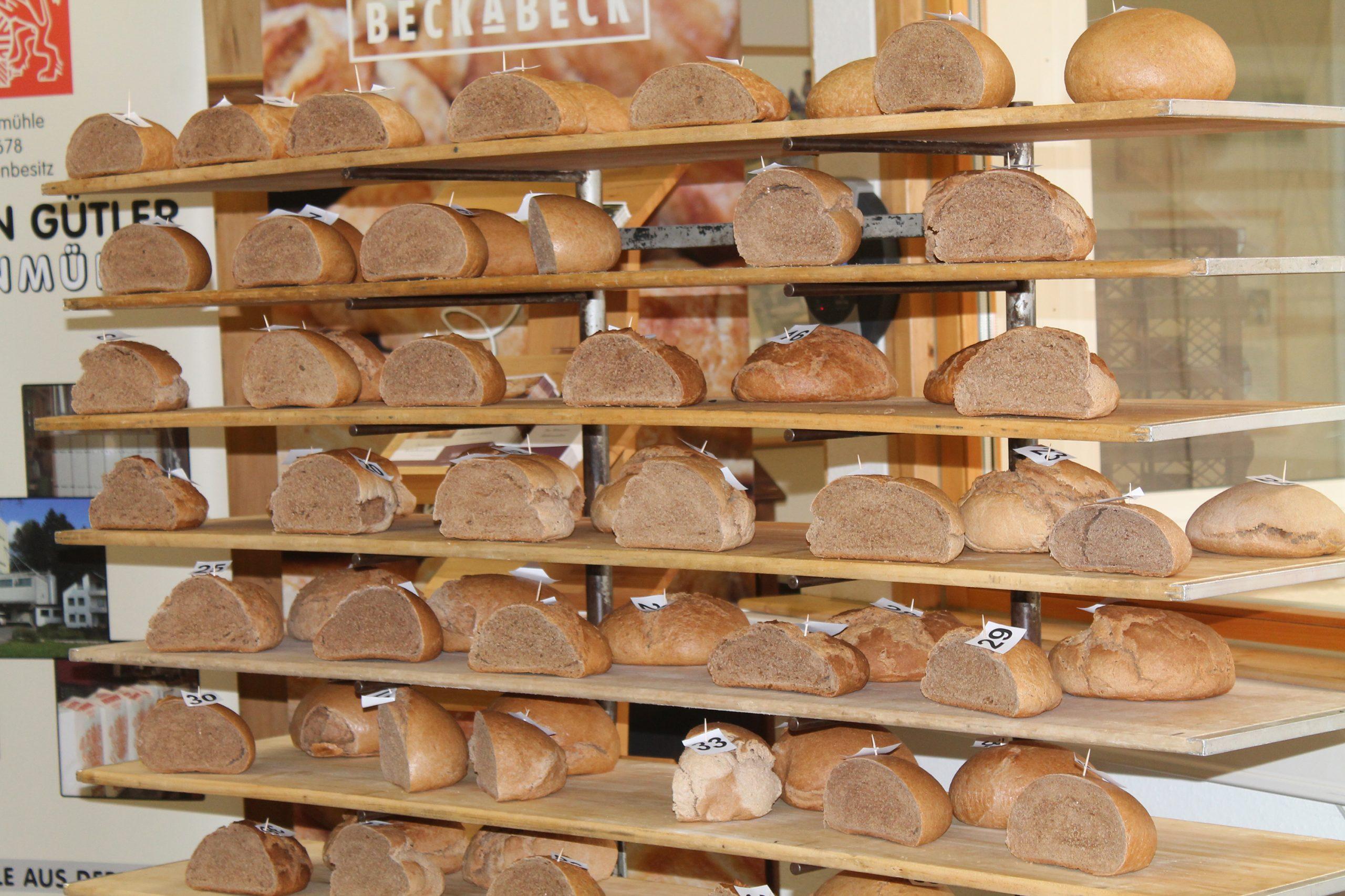 Moderne Weizensorten liefern grundsätzlich ähnlich aromatische Brote wie die alten Sorten | Bildquelle: Universität Hohenheim / Dietmar Töpfer